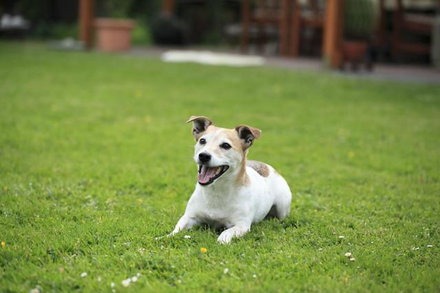 犬を自宅の庭で飼うときの庭造り10のコツ〜DIY〜